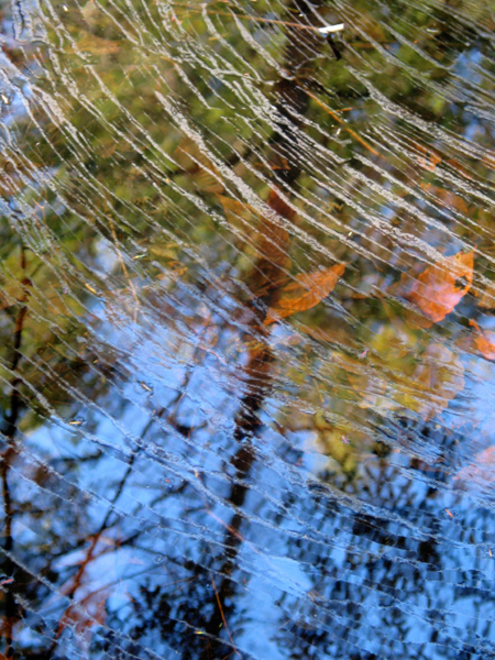 Under the Web