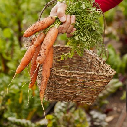 Organic Farm to Table Cooking Classes