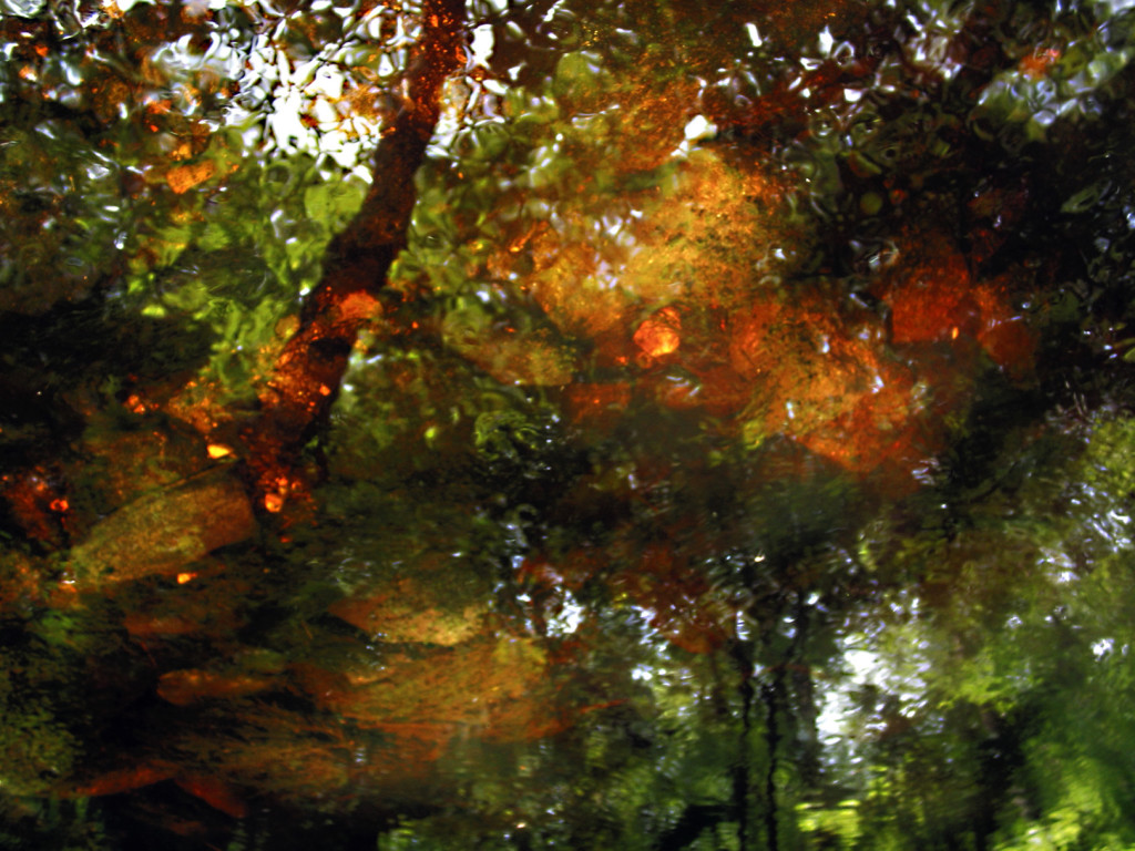 Dreaming, Impressionistic Photograph by Leslie Cerier