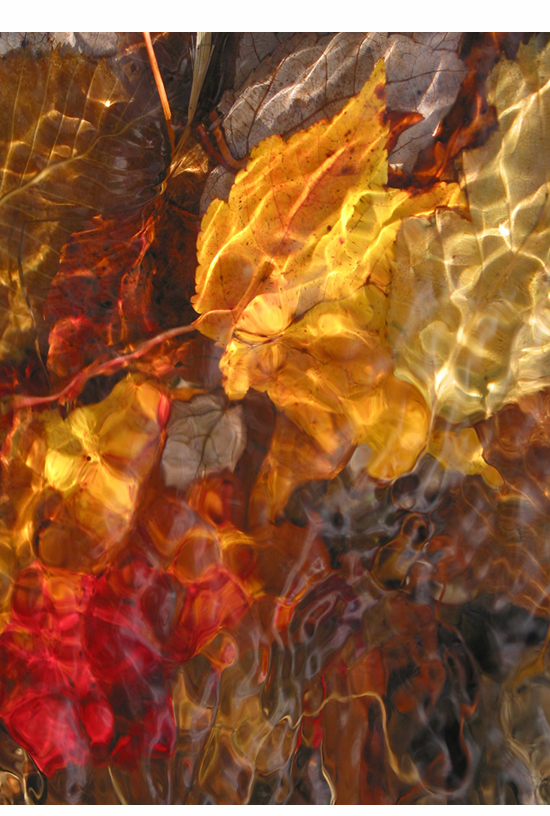 Red and Gold Leaves, as vertical