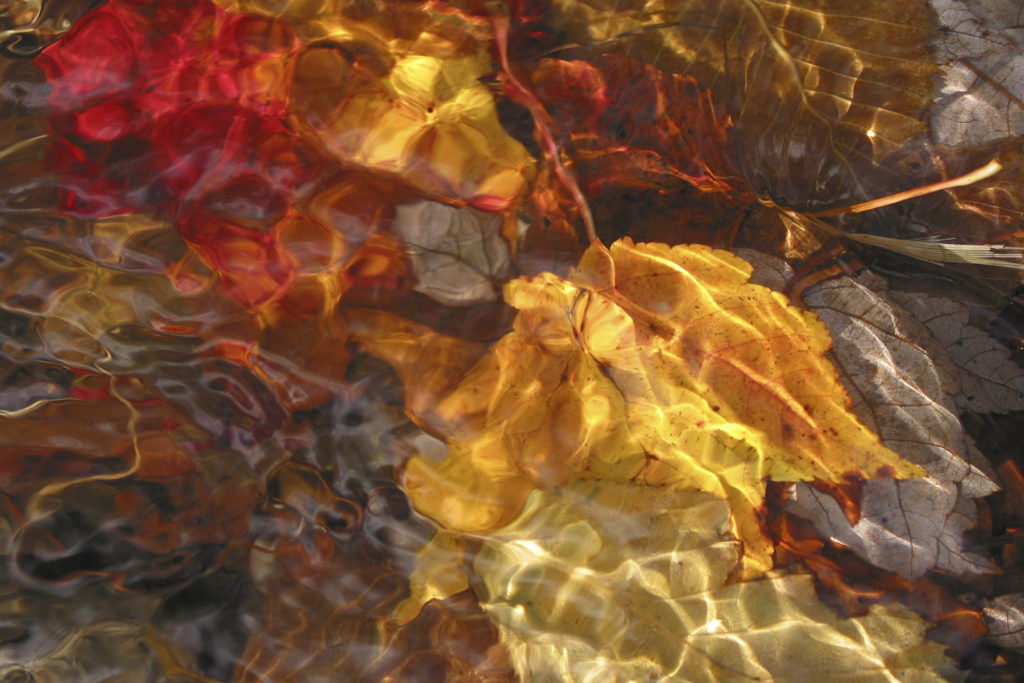Red and Gold Leaves Impressionistic Nature Photography