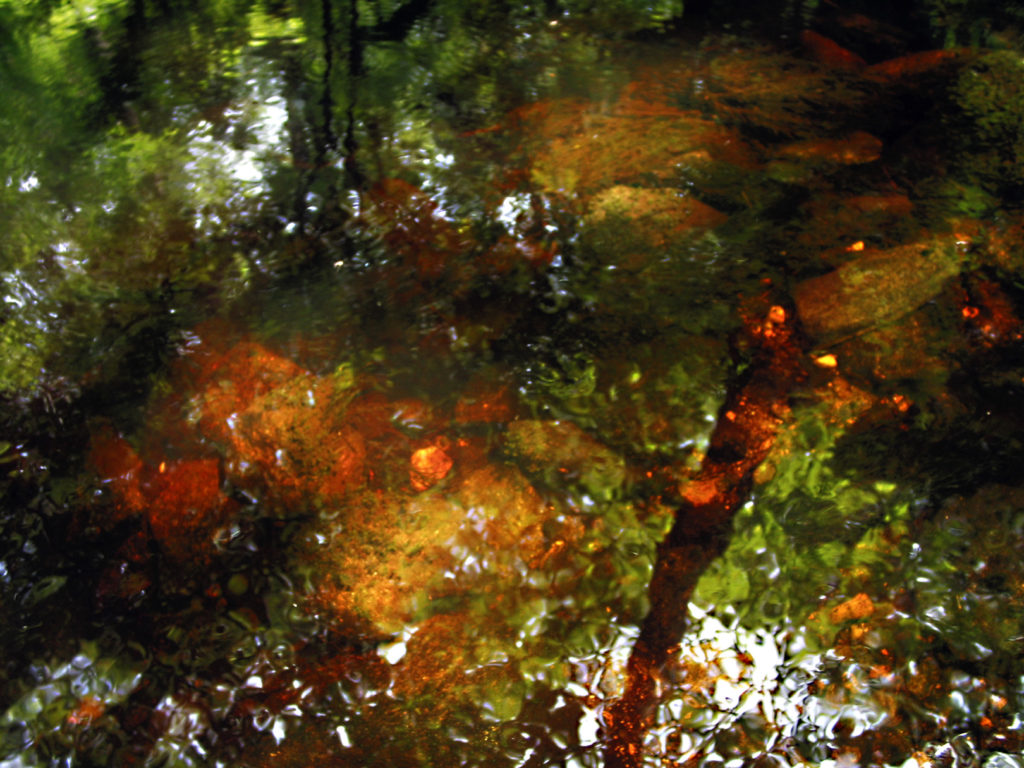 Dreaming of You, Impressionistic Nature Photograph by Leslie Cerier