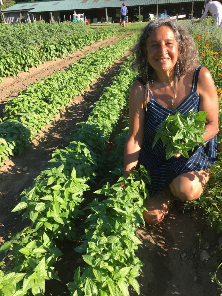 Picking Organic Basil at the Brookfield Farm