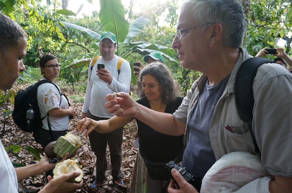 Tasting cacao seeds