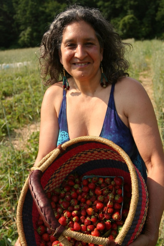 Basket of fresh picked organic strawberries