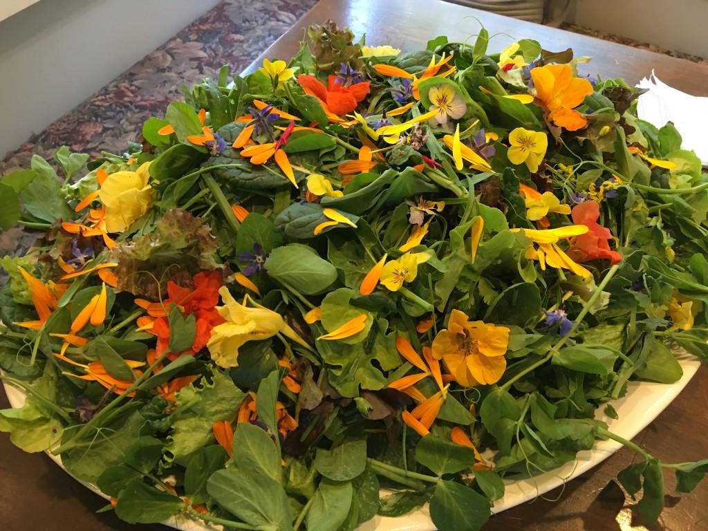 Esalen Organic Green garden salad