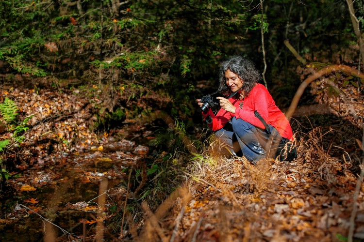 Leslie Cerier photographs in the woods Nov. 4 near her Shutesbury home.