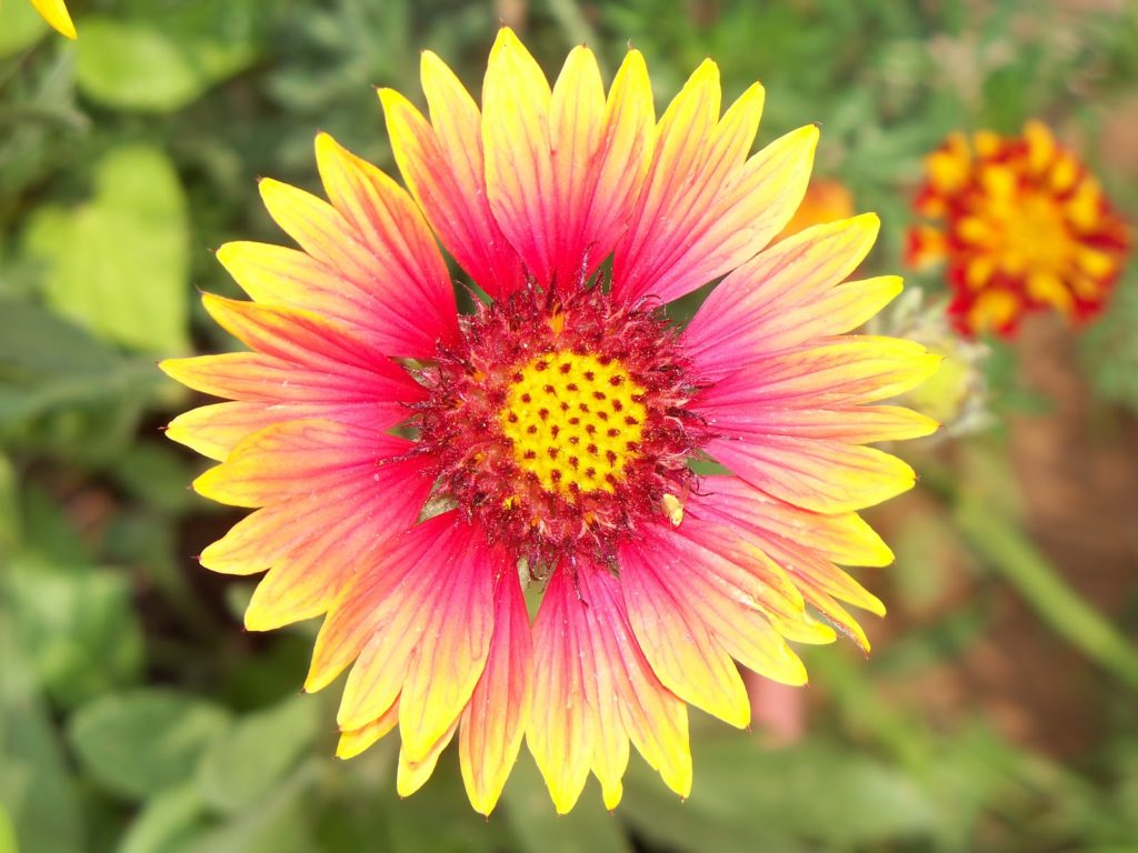 Bright flower for Contemplative Feast June 16