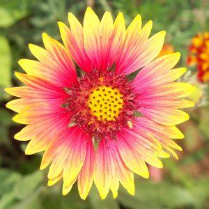 Bright flower for Contemplative Feast June 16