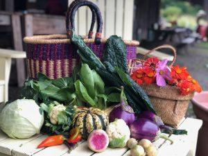 fall harvest veggies