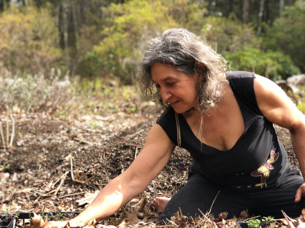 The Organic Gourmet in her gardens planting